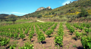 Award-Winning Bijou Wine